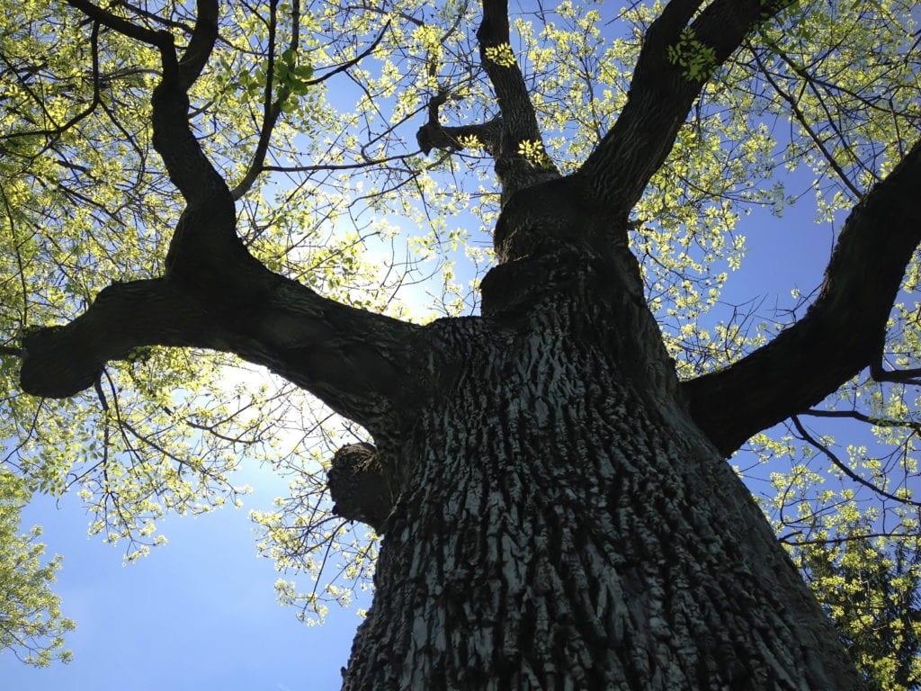 Ash Tree Removal Evaluation