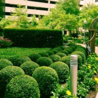 """<a href=""""https://greenscapesky.com/ground-maintenance-services/commercial-landscaping/"""">Landscaping</a>"""