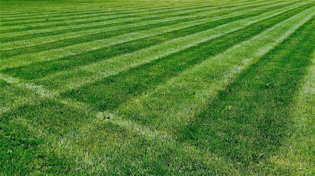 Lawn Mowing Creative Striping