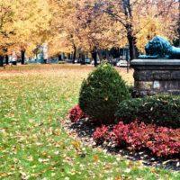 "<a href=""https://greenscapesky.com/ground-maintenance-services/commercial-leaf-removal/"">Leaf Removal</a>"