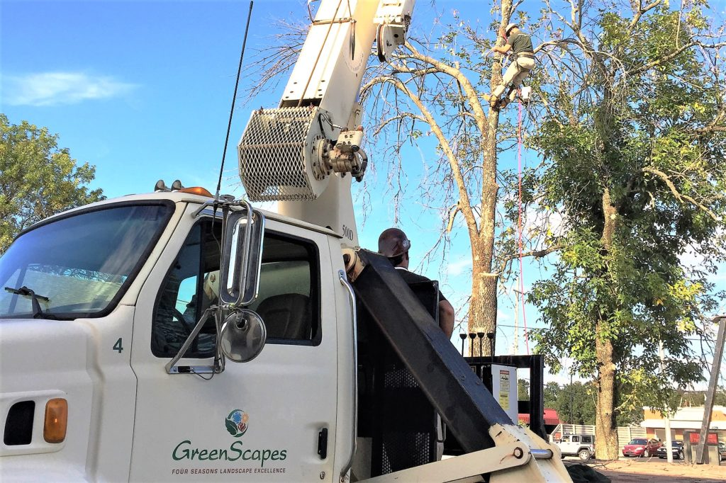 Tree Crane Service 1