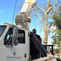 """<a href=""""https://greenscapesky.com/ground-maintenance-services/tree-removal/"""">Tree Removal</a>"""