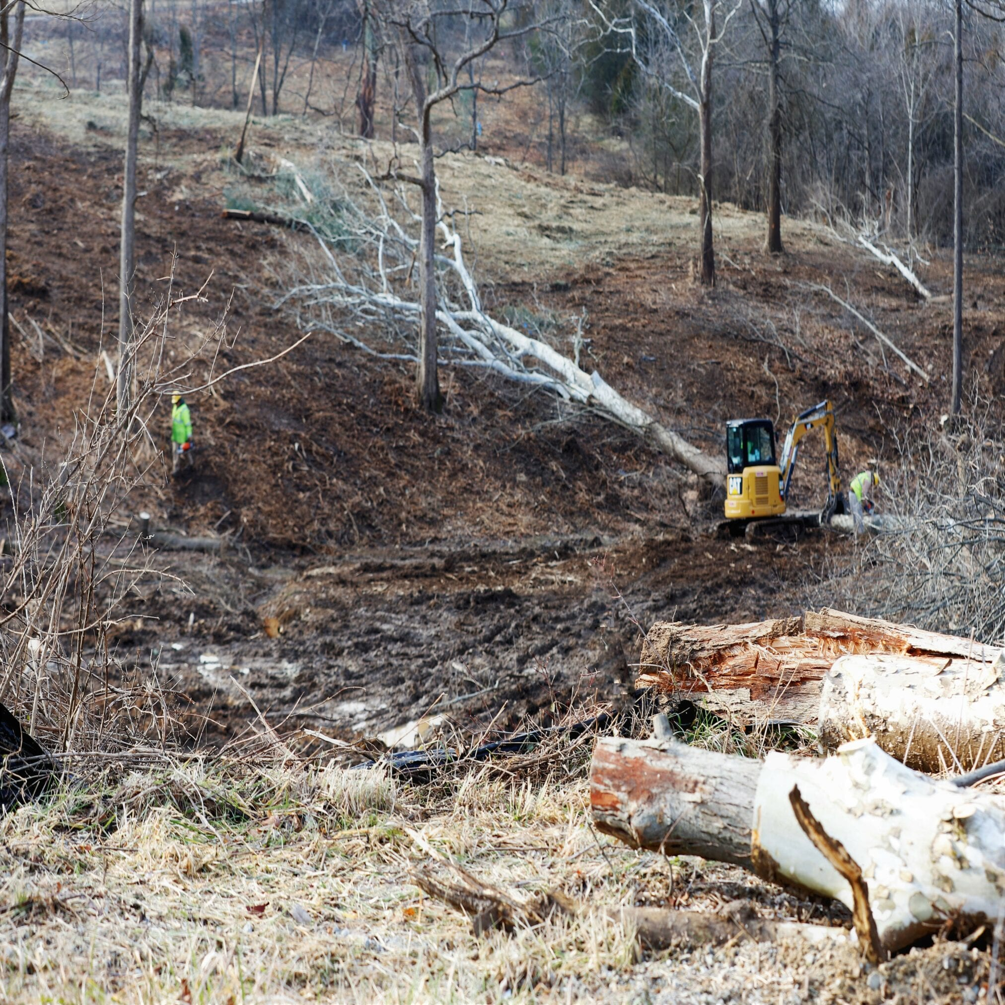 Land Clearing 4 1